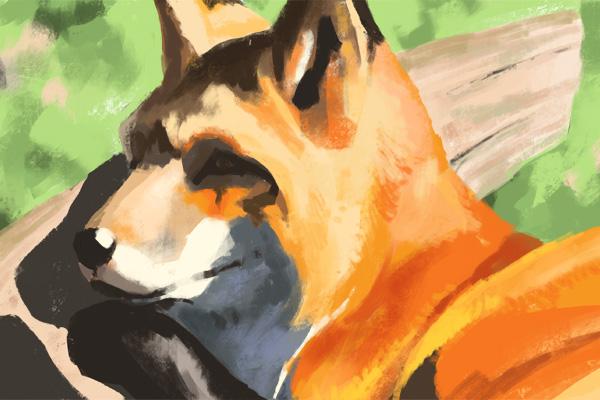 picture-fox006