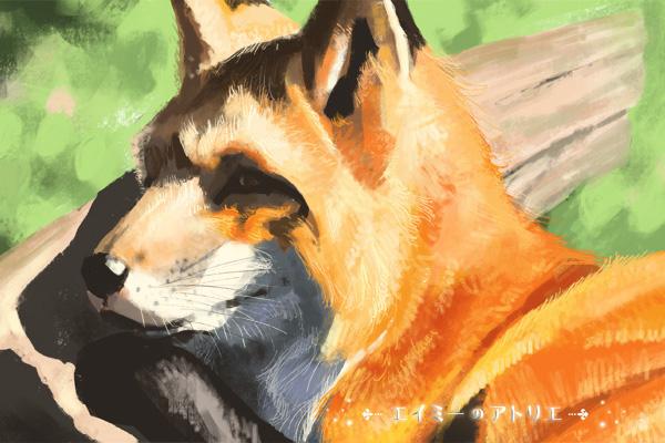 picture-fox007