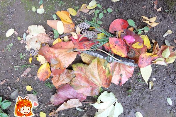 2019-autumn-leaves07