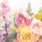 大切な人に感謝を込めてプレゼントしたいおすすめのお花